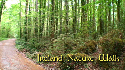 IRELAND NATURE WALK